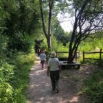 Cerdded yng Nghoedtir. Walking in Woodland